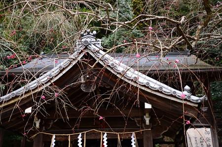 本殿前の枝垂れ梅