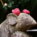 写真: 狛鼠の花飾り~