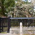 写真: 中山邸跡の白梅