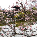 梅の中の泰平閣