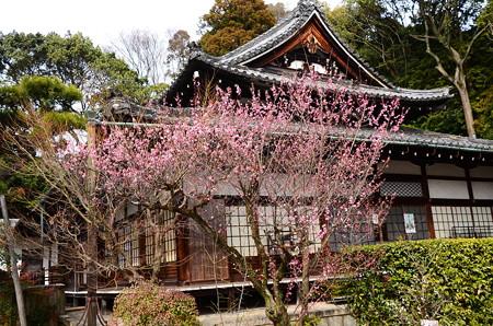 梅咲く岡崎別院