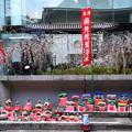六角堂の桜風景