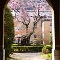 写真: 府庁旧館の春