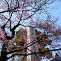写真: 宥清寺の早咲き桜
