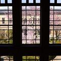 写真: 窓越しの春