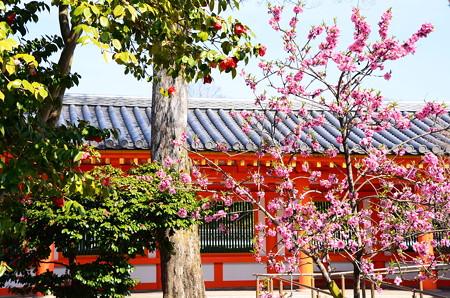 三十三間堂の桃と椿