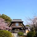 写真: 桜に挟まれた傍花閣