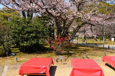 ボケと山桜(ヤマザクラ)