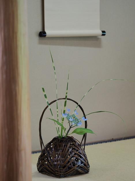 和室に咲く