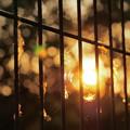 写真: 夕日とフェンス