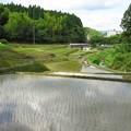 棚田風景_4646