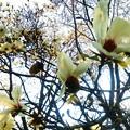 Photos: 桜 (2)