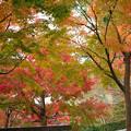 秋の平等院鳳凰堂3