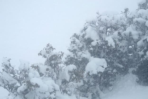 Photos: 大雪ですわっ