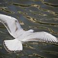サンヨン で撮った 水鳥類-1