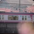 Photos: 170219_三浦・小松ヶ池周辺_京急電車_G170219B8711_MZD300P_X7Ss