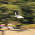 Photos: 近くの公園で(31)