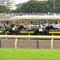 Photos: 東京8R フリソ