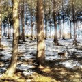写真: 木漏れ日