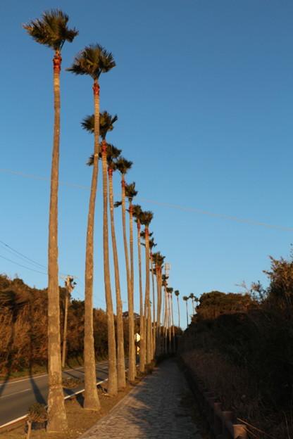 南国ムードのヤシの並木