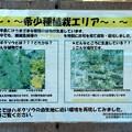 写真: 希少種「ハギクソウ」植栽エリア