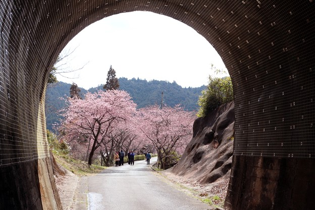 トンネル坑口からの景観