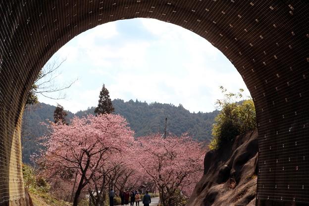 トンネル坑口と桜トンネル