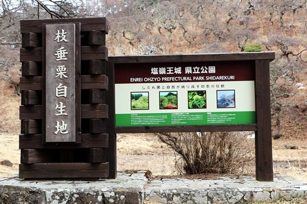 塩嶺県立公園「枝垂栗自生地」