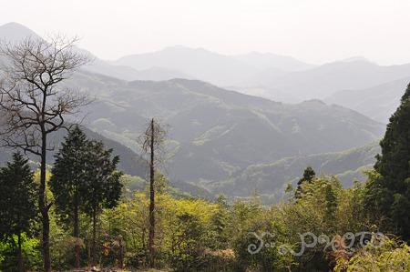 公園からの風景