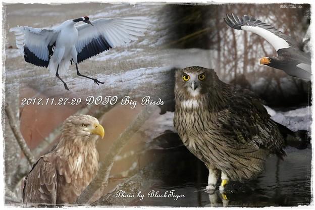 進撃の巨鳥たち