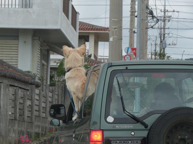 パトロ-ル犬