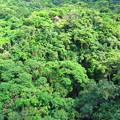 森の展望台