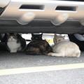 猫談義2016.06.15雑司が谷