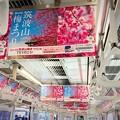 Photos: 筑波山梅まつりはTXで行こう!