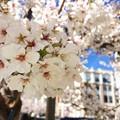 桜も満開♪
