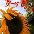Photos: あぢ~