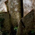 写真: 板状根が見せるアート