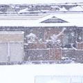 Photos: 久しぶりに雪