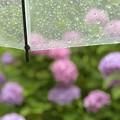 写真: 傘をさしながら