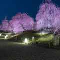 写真: 春の宵