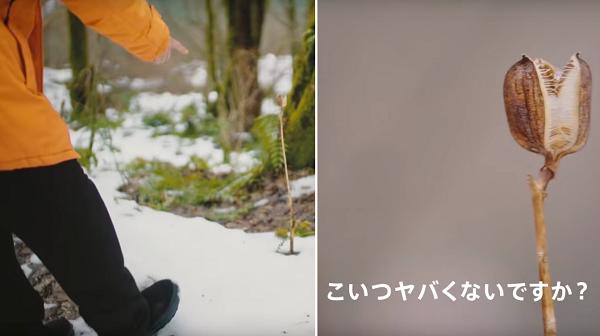 Photos: 【動画】山?賢人が「こいつヤバくないですか?」と近づいたのは・・・エイリアンのような植物!?