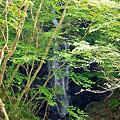 Photos: 清涼の滝 下段 2012.5.21