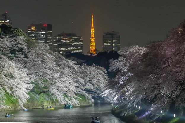Photos: 桜と東京タワー