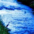 写真: 浅川にて