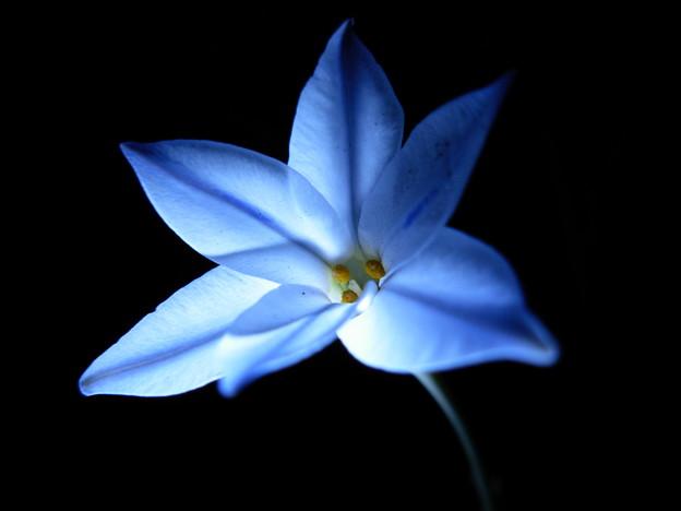 写真: 青の世界