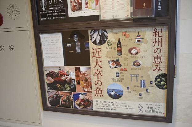 近畿大学水産研究所(銀座店)(2)