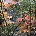 写真: 書写山円教寺(兵庫県姫路市)(9)