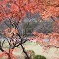写真: 伽耶院(兵庫県三木市)(6)