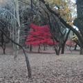 写真: 紅葉 相模原公園