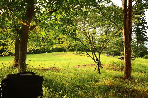 茂みの陰の舞台裏